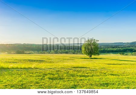 Lonely tree on the meadow. Country landscape