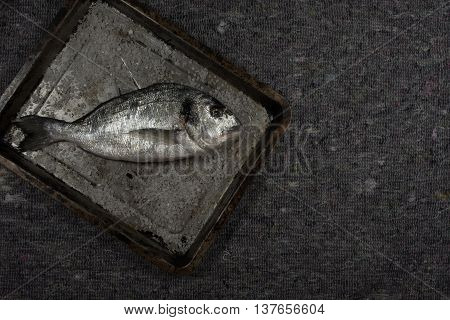Raw dorado with salt on pan with gray background