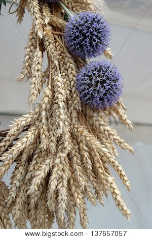 NEDELISCE, CROATIA - JULY 02, 2016: Bundle of wheat with flower, harvest in Nedelisce, Croatia on July 02, 2016