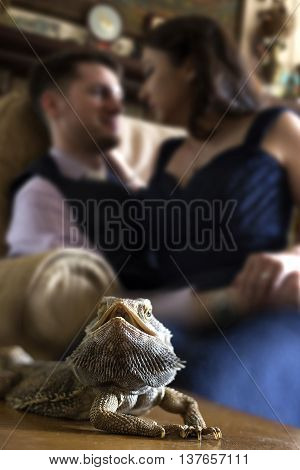 Bearded Dragon reptile pet posing with affectionate owners