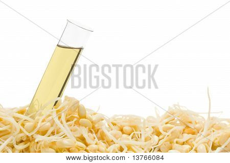 Soy Bean Sprout Biofuel