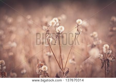 Closeup view of beautiful dry grass on in sunny warm weather afternoon on natural background vertical picture