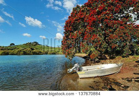 Motor boat and Pohutukawa tree, a beach in Bay of Islands, New Zealand