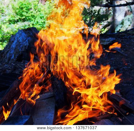 campfire flames, isolated fire, camping fire, outdoors