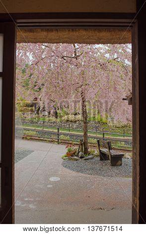 Open the door to looking the cherry blossoms  in bloom.