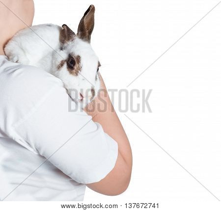 rabbit white held on shoulder isolated on white