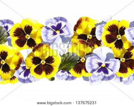 Delicate floral design of beautiful flowers isolated viola