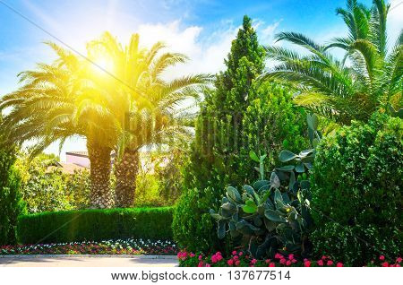 beautiful park with palm trees and evergreen plants