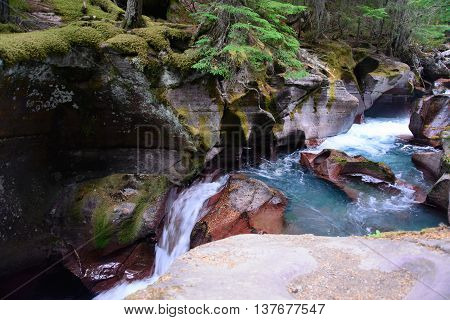 Avalanche Gorge Glacier national park montana usa