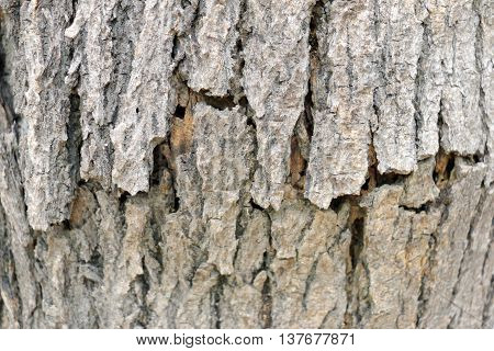 Abstract bark texture and bark background .tree bark.