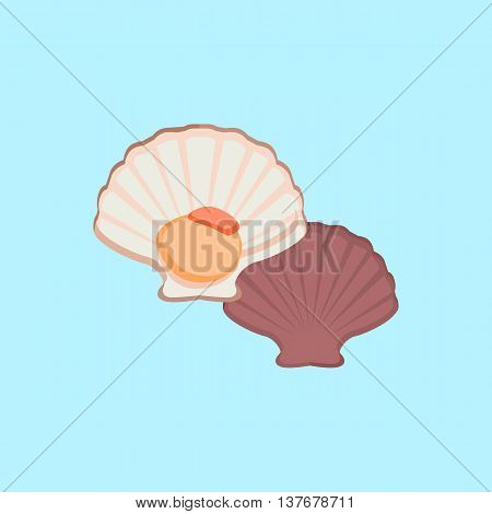 Oysters in colour variant. Seafood concept icons in flat style design. Vector illustration fresh deep-sea oyster. Beautiful shell pearl mussels.