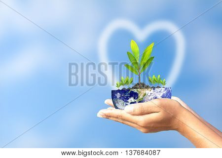 We love the world of ideas, man planted a tree in the hands. Elements of this image furnished by NASA