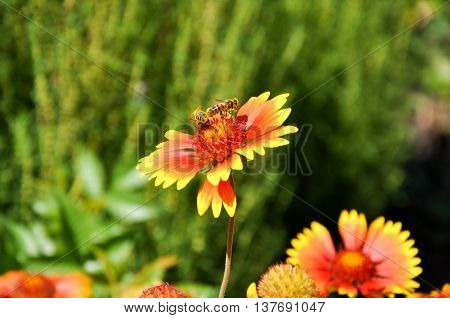 flowers plants nature macro insects animals variegated