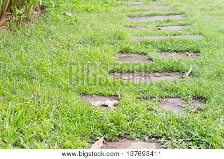 stone walkway in green grass field backyard