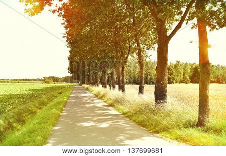 Idyllic footpath through fields and forest, nature background. Country road or street through an idyllic landscape in summer. Forest, fields with lens flare.
