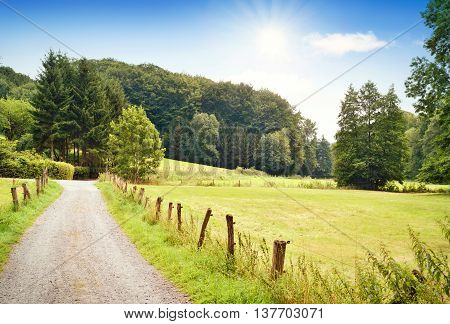 Idyllic country road in the sunset, with copy space and forest. Single lane road through fields and pastures, nature background.