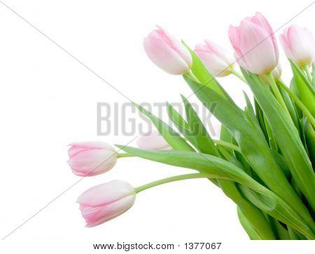 Bouquet Of Tuplips