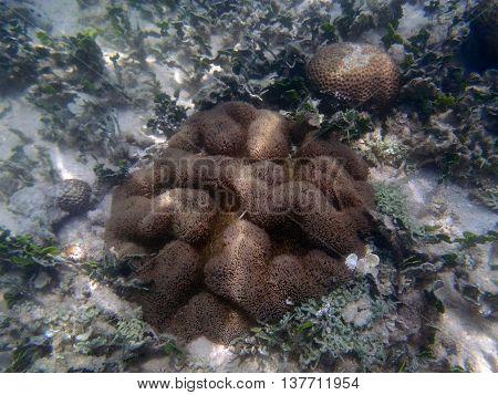 Beauty Of The Undersea World
