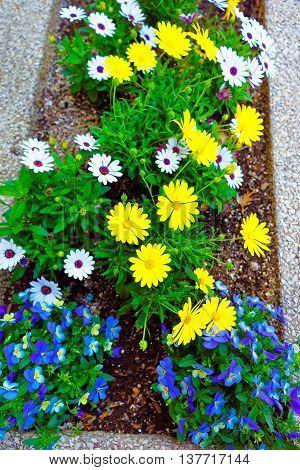 Color Flower Bed In Philadelphia City Center