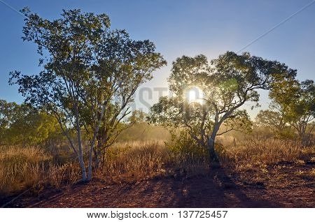 Sunlight shining through dust and woodland in northern Queensland, outback Australia
