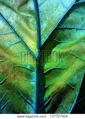 The veins of the leaves of burdock resemble the under side illumination map of the planet.
