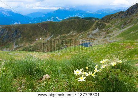Mountain Top Panorama. Pulsatilla Alpina Flower