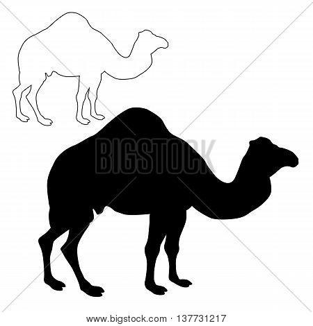 realistic camel silhouette black set vector illustration