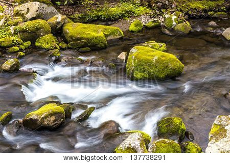 Forest creek. Water cascades over moss covered rocks in Great Smoky Mountains National Park.