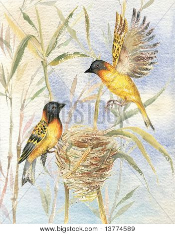 Drawing of two birds sitting by their nest on background of blue sky