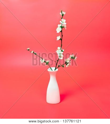 blossoming cherry twig in vase on red