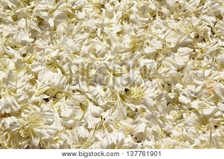White petals. Usable as a background