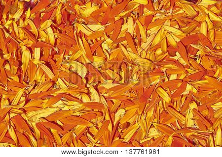 Orange petals. Usable as a background