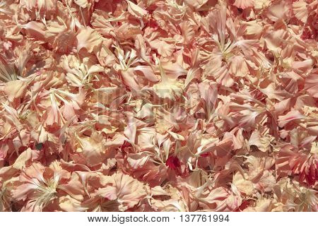 Pink petals. Usable as a background