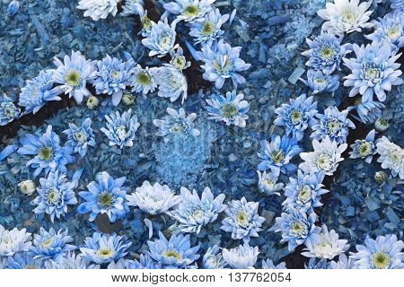 Blue flowers on wood chips Usable as a background