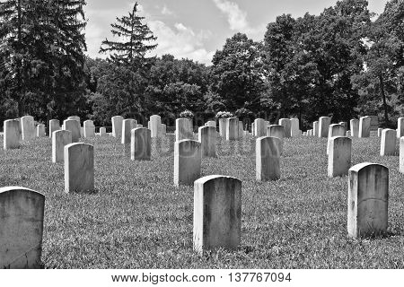 Rows of Headstones at a Veteran's Cemetery I