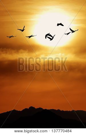 Sandhill Cranes in Flight at Sunrise Vertical View