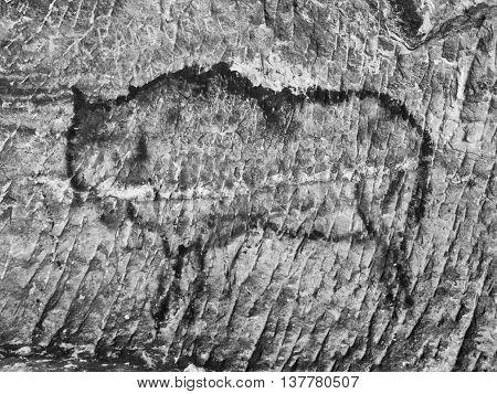 Art In Sandstone Cave. Black Carbon Paint Of Bison