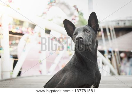 Close up of a black stray dog