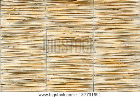 reed harmony, macro, material, natural, organic background