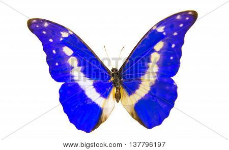 butterfly beautiful macro isolated on white background