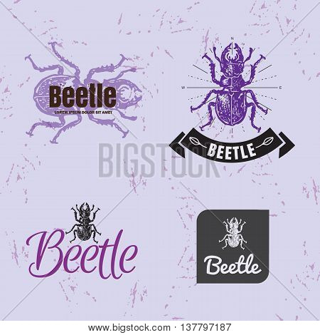 Vector colorful set with forest stag-beetle. The beetle as main element of logotypes on violet background. Engraves vector design graphic element emblem logo insignia sign identity logotype