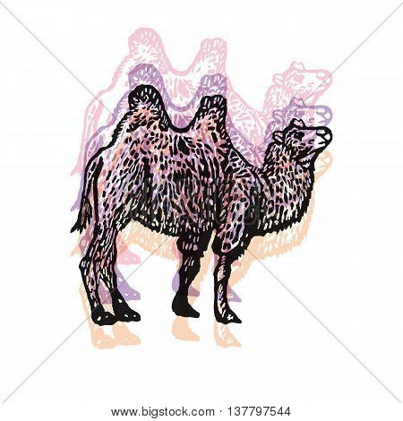 Camel sign. Bactrian Camel. Desert Tourism. Vector engraved Illustration. Linocut camel Isolated on a white background