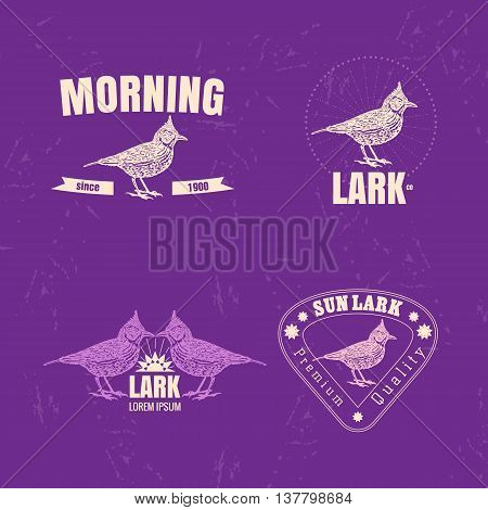 Vector colorful set with desert Crested lark bird. The lark bird as main element of logotypes on violet background. Engraves vector design graphic element emblem logo sign identity logotype