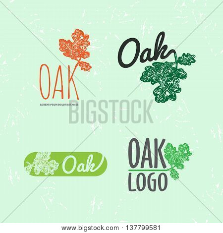 Vector colorful set with oak leaf and acorn. The oak leaf as main element of logotypes on light green background. Engraves vector design graphic element emblem logo sign identity logotype