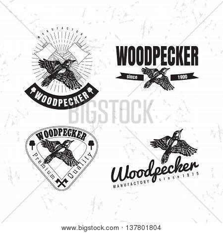 Vector black and white logo set with forest woodpecker bird. The woodpecker bird as main element of logotypes on white background. Engraves vector design graphic element emblem logo sign