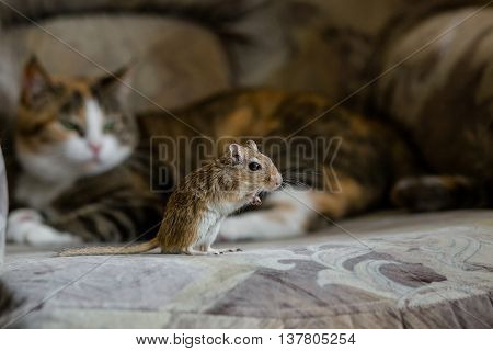 Cat playing with little gerbil mouse. Natural light