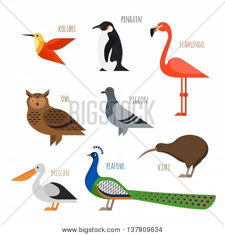 Vector set of Colorful bird icons. Owl hummingbird pigeon and penguin