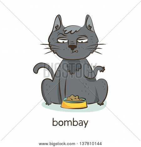 Bombay Cat. Cat Character Isolated On White