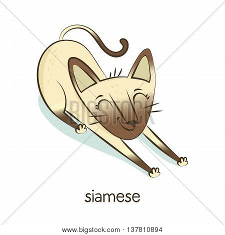 Siamese. Cat Character Isolated On White