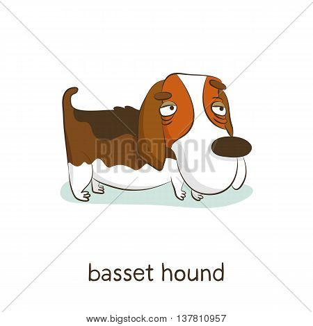 Basset Hound. Dog Character Isolated On White